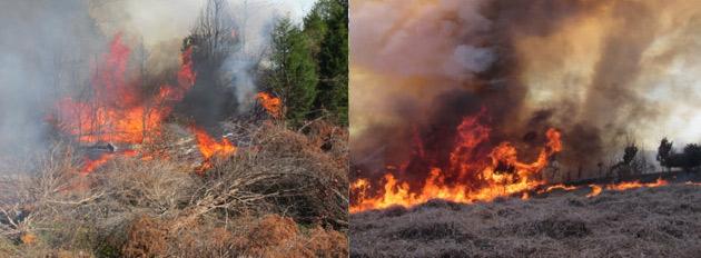 (l) Cedar/Pine burn (r) Kudzu burn