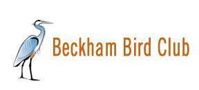 logo_beckham