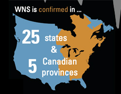 WNS graphic