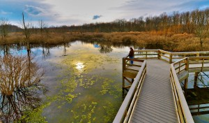 Audubon Wetlands Boardwalk