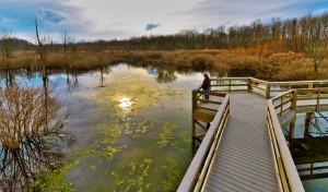 Audubon Wetlands Boardwalk